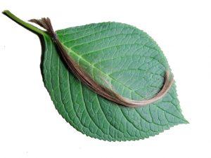 رنگ موی گیاهی ابریشم - رنگ موی زیتونی - رنگ موی گیاهی زیتونی - سالم و طبیعی - سالم بازار